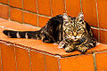 An old tabby cat crouching on a step.jpg