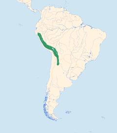 Andean Flicker distr.png