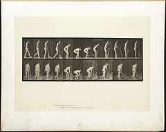 Animal locomotion. Plate 219 (Boston Public Library).jpg