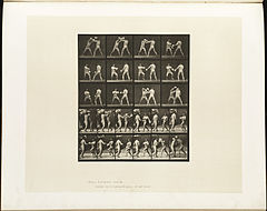 Animal locomotion. Plate 334 (Boston Public Library).jpg