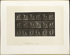Animal locomotion. Plate 350 (Boston Public Library).jpg