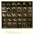 Animal locomotion. Plate 522 (Boston Public Library).jpg