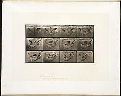 Animal locomotion. Plate 750 (Boston Public Library).jpg