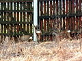 Animals13Slovakia1.JPG
