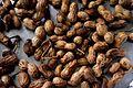 Arachis-hypogaea (peanuts).jpg