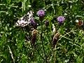 Artenvielfalt im LSG Oldhorster Moor 11.jpg