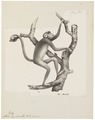 Ateles hypoxanthus - 1809-1845 - Print - Iconographia Zoologica - Special Collections University of Amsterdam - UBA01 IZ20200119.tif