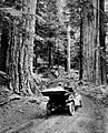 Automobile at the entrance to Mount Rainier National Park (4670205786).jpg