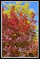 Autumn Leaves begin to fall-058 (5753915515).jpg