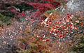 Autumn Seoul Bukaksan logo 03 (8157061175).jpg
