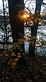 Autumn Sunset 1 (184150311).jpeg