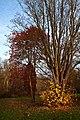 Autumn Trees - panoramio.jpg