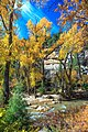 Autumn colours in SW Utah - spectacular colours along Huntington Creek on Hwy 31, Utah (15467816408).jpg