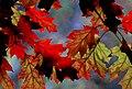 Autumn hues. (14963625851).jpg