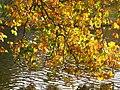 Autumn leaves beside St James's Park Lake - geograph.org.uk - 1568794.jpg
