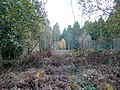 Autumnal forest - geograph.org.uk - 1560612.jpg