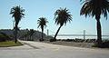Avenue of the Palms - Treasure Island (3478127922).jpg