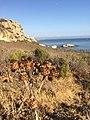 Avila Beach, CA, USA - panoramio - Sergei Gussev (22).jpg