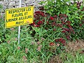 Azerailles (M-et-M) village fleuri... (01).jpg