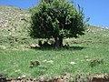 Bağin ( barena ) -yalnızdmlar mezrası - panoramio - zazamenaf (4).jpg