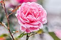 Baldwin Wallace University Flowers (20831219308).jpg