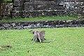 Bali, Indonesia Uluwatu Temple - panoramio (14).jpg