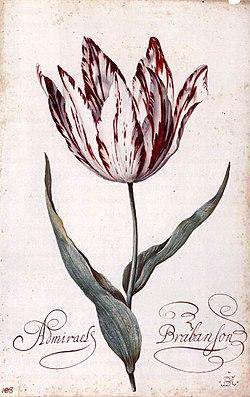 Balthasar van der Ast - Tulip - WGA01050.jpg