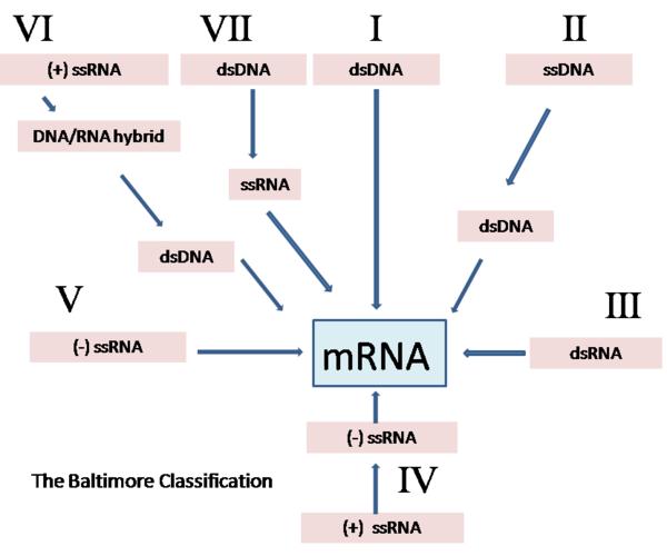 Papillomaviridae taxonomia. Papillomaviridae taxonomia