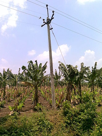 Maharashtra State Electricity Board - MSEB power line in farms at Chinawal village in Jalgaon district