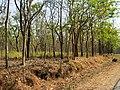 Bandipur Tiger Reserve - panoramio (21).jpg