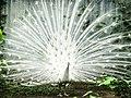 Bangabandhu Sheikh Mujib Safari Park 33.jpg