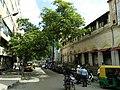 Bangalore street trees 4.jpg