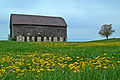 Barn and dandelions in Caledon.jpg