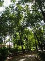 Bayombong,NuevaVizcayaCapitoljf0263 18.JPG