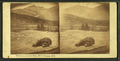 Bear at the Glen House, White Mountains, N.H, by Bierstadt Brothers.png