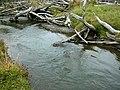 Beaver habitat in Tierra del Fuego, Chile.jpg