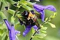 Bee (4914626937).jpg