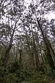 Benandarah NSW 2536, Australia - panoramio (54).jpg