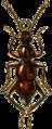 Bergrothia saulcyi Jacobson.png