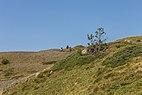 Bergtocht van Arosa via Scheideggseeli (2080 meter) en Ochsenalp (1941 meter) naar Tschiertschen 07.jpg
