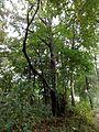 Berlin-Mahlsdorf Waldowpark 04 Baumbestand.JPG