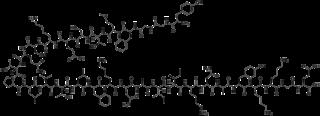 <i>beta</i>-Endorphin chemical compound