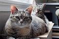 Betty Jane & Dmitri (4993444457).jpg