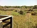Bike Trail, Jekyll Island, GA - panoramio (3).jpg
