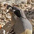 Bird Camera Hog.jpg