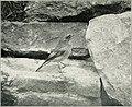 Bird notes (1913) (14746867201).jpg