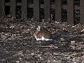 Birthday Bunny (8836105881).jpg