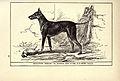Black-Tan Terrier BDL.jpg