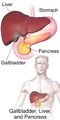Blausen 0428 Gallbladder-Liver-Pancreas Location.png