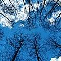 Blue sky @ Ghoda tabela.jpg